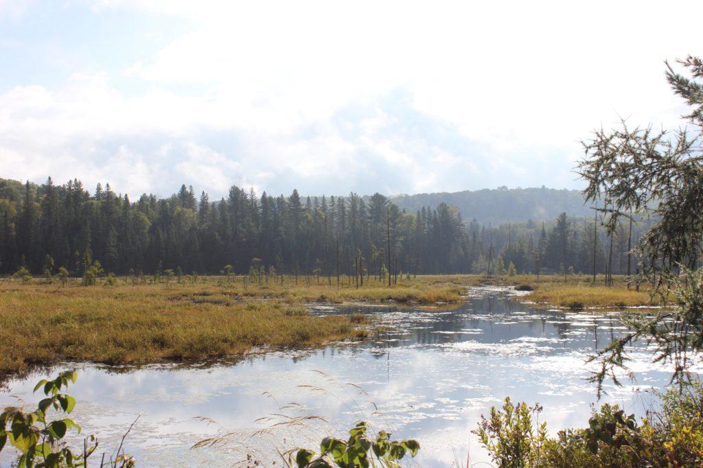 moorlandschaft-boreale-zone