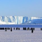 Die Polare/Subpolare Zone