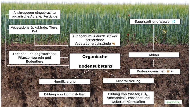 Umwandlung_organische_bodensubstanz