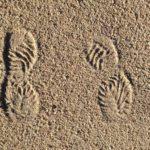 Bodenarten – Definition, Unterteilung, Eigenschaften