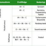 Prozesse der Bodenbildung