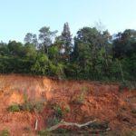 Rubefizierung – Definition, Voraussetzungen, Bodentyp