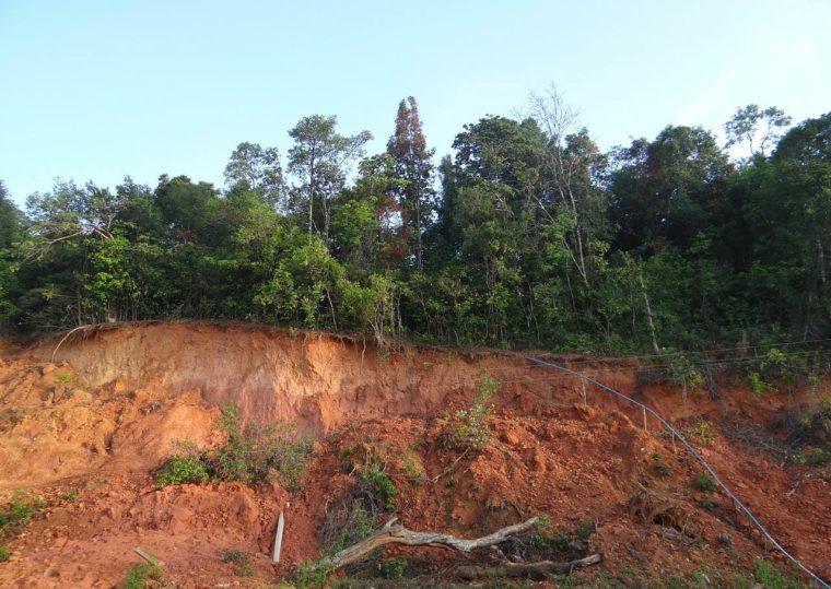 Rubefizierung - Definition, Voraussetzungen, Bodentyp
