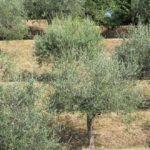 Vegetation im Mittelmeerraum