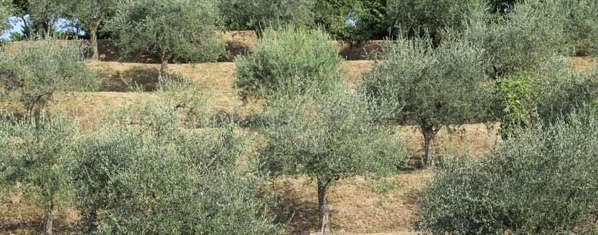 teaser-mittelmeerraum-vegetation