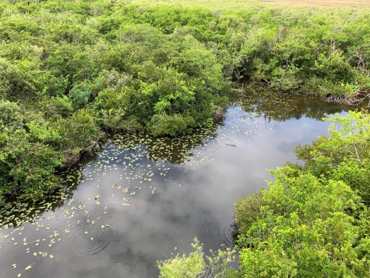 mangrovenkueste-florida-sumpf