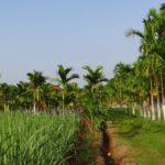"""Die """"Grüne Revolution"""" in Indien - Fluch oder Segen?"""