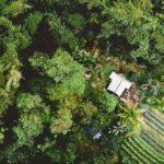 Die Erschließung von Amazonien