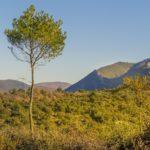 Vegetation im Mittelmeerraum - Höhenstufen
