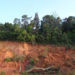 Ferralitiserung  - Definition, Ablauf, Bodentyp