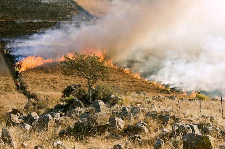 Vegetation im Mittelmeerraum - Feuer